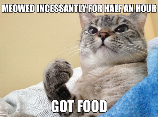 funny-cat-asking-food-meowed