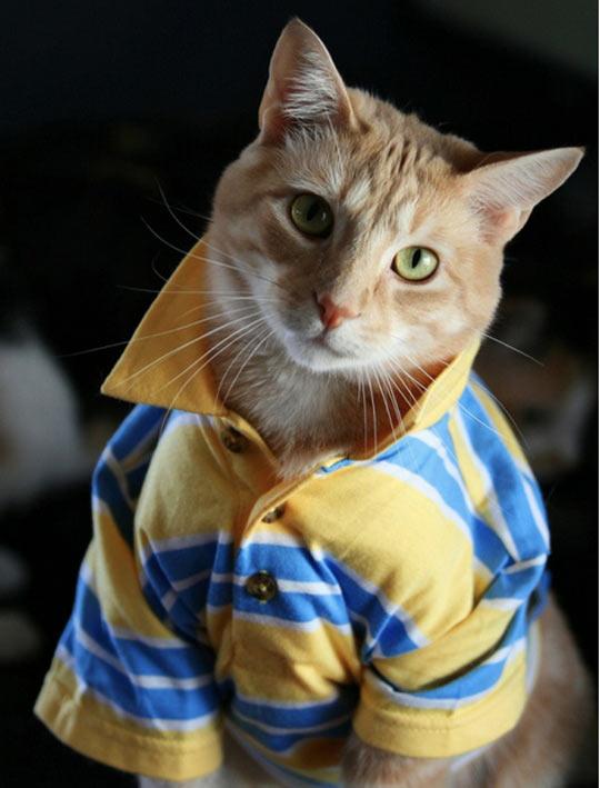 funny-cat-bro-popped-collar