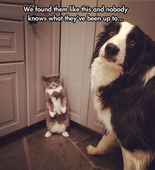funny-cat-dog-guilty-corner