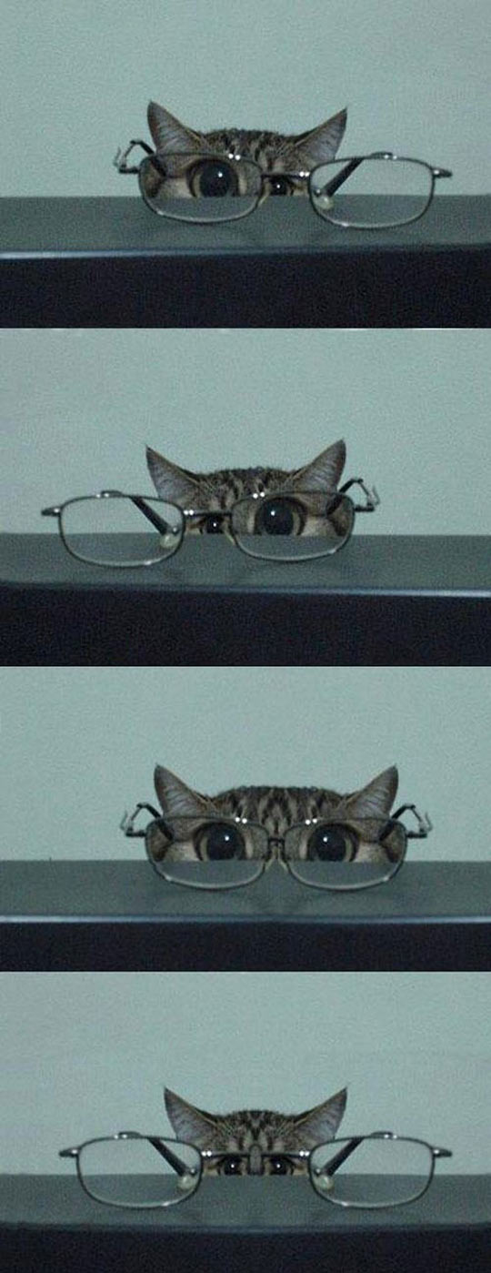 funny-cat-glasses-eyes-table