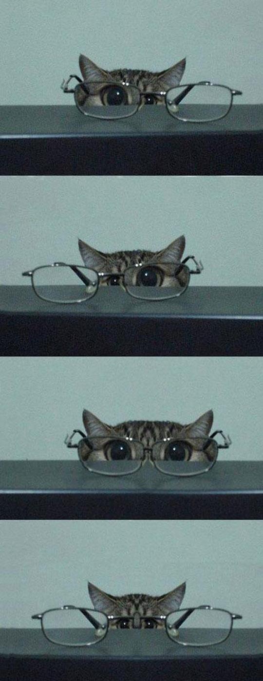 Cat In Glasses Isn't Kitten Around
