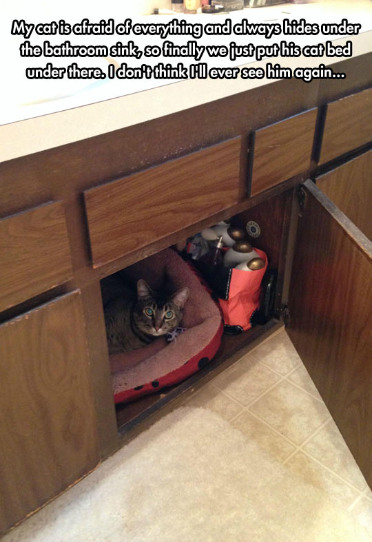 funny-cat-hiding-under-sink