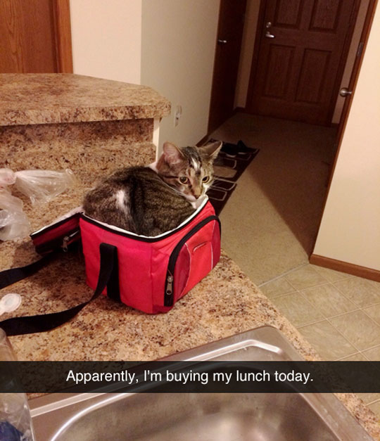 funny-cat-lunch-bag-kitchen