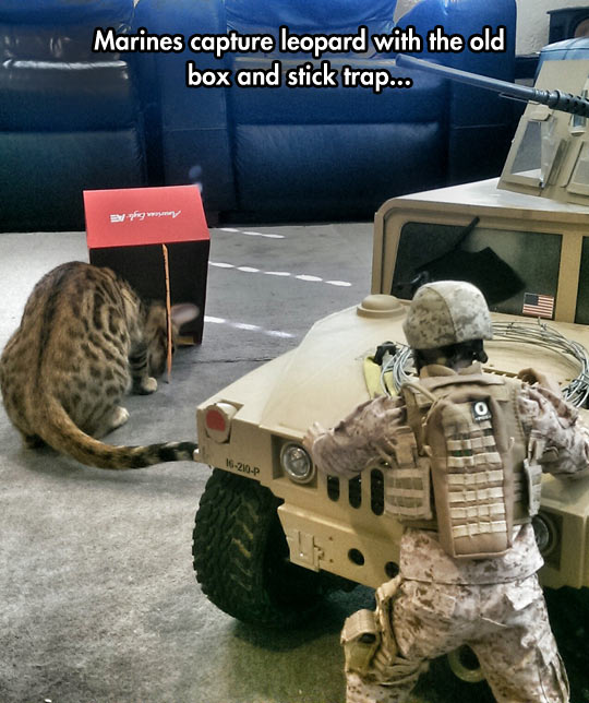 funny-cat-marines-box-cat