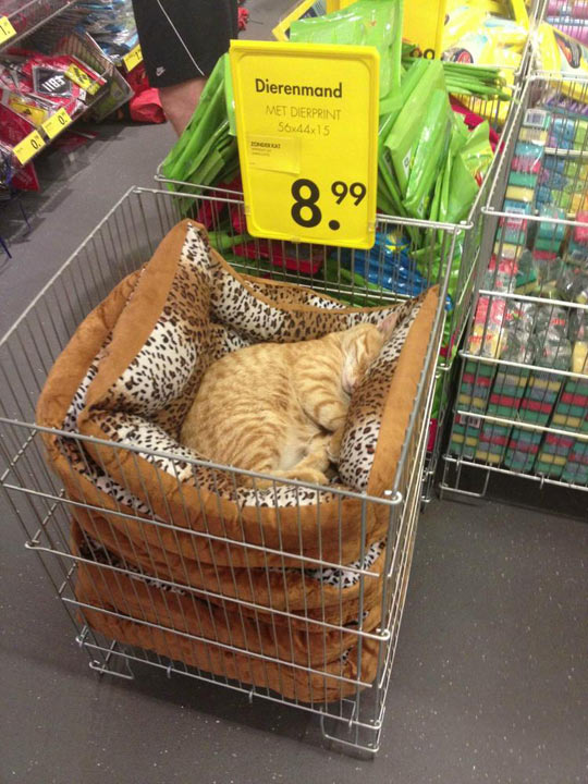 funny-cat-sleeping-pillow-animal-print-shop