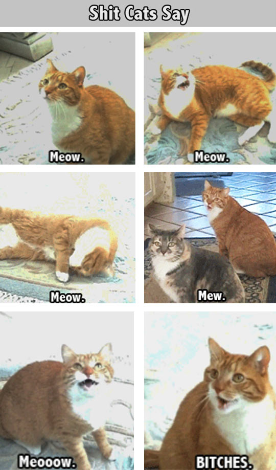 Things That Cats Say