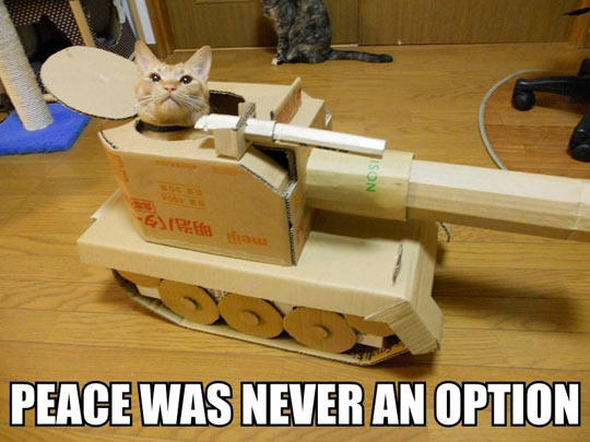 funny-cat-tank-inside-playing