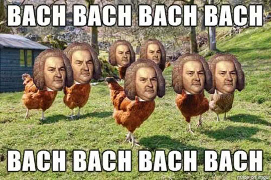 funny-chicken-Bach-farm-bird