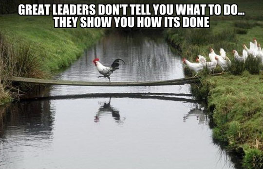 funny-chicken-crossing-river-leaders