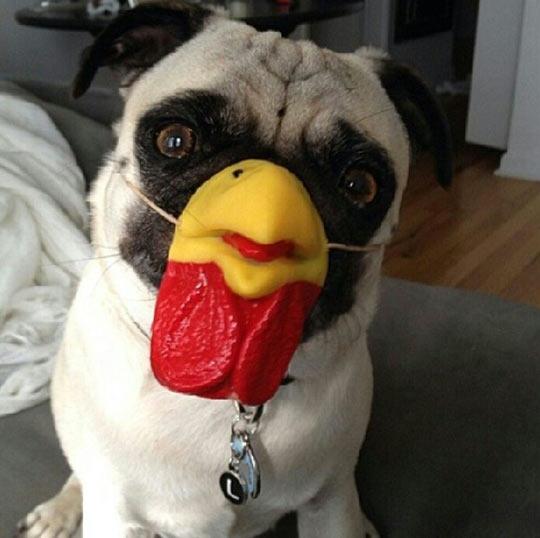 Pug Chicken Mask