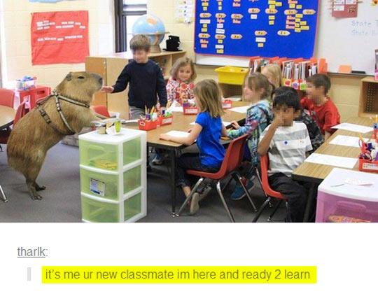 New Classmate