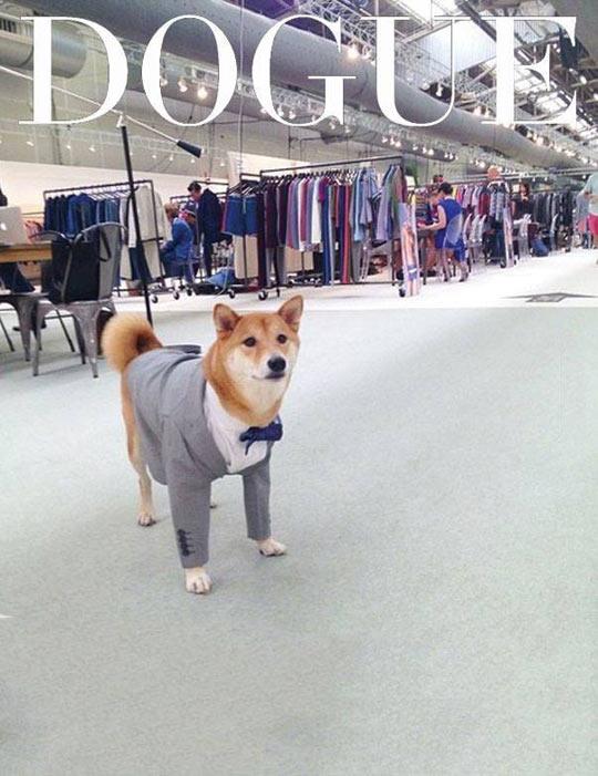 Such Fashion