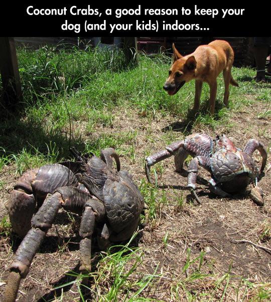 funny-coconut-crabs-dog-backyard
