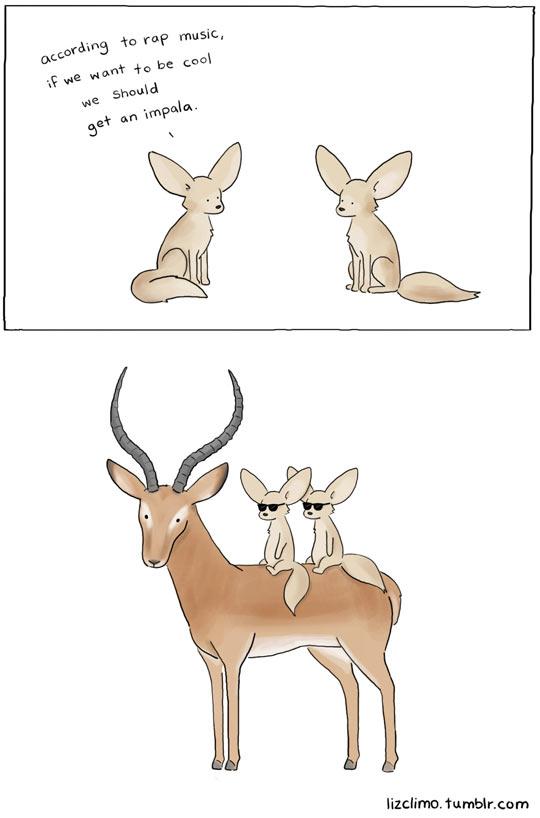 funny-comic-fennec-impala-rap