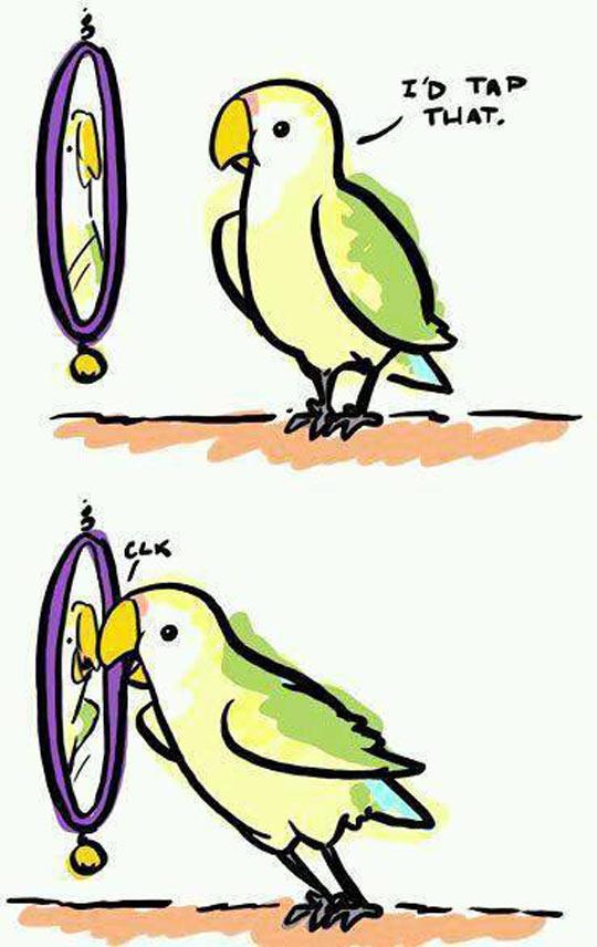 A Self Love Bird