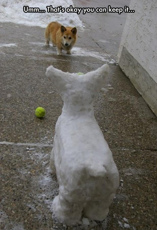 funny-corgi-dog-playing-snow