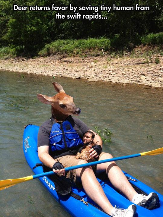 funny-deer-swap-face-rapids-river