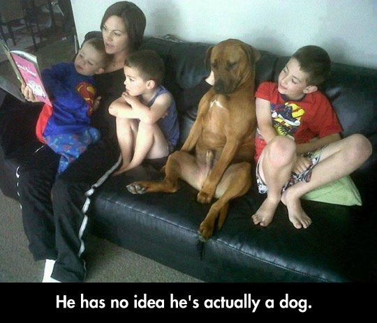 funny-dog-acting-human-children-couch
