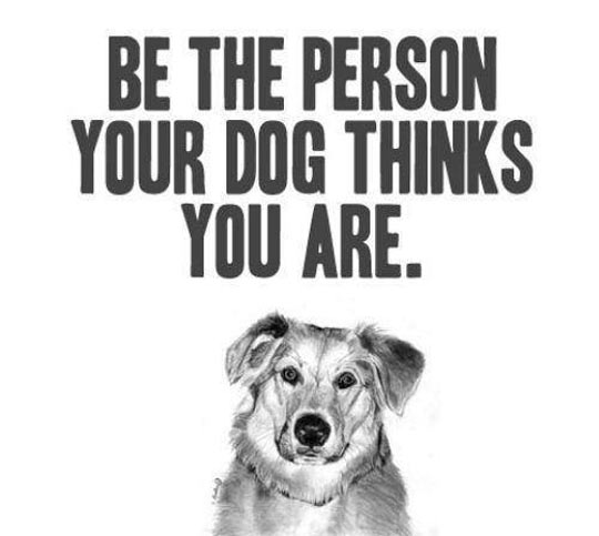funny-dog-advice-good-person
