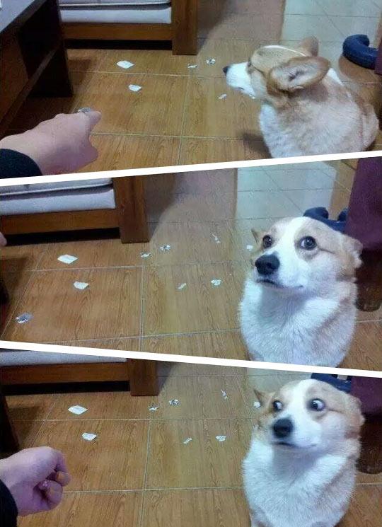 funny-dog-bad-behavior-face