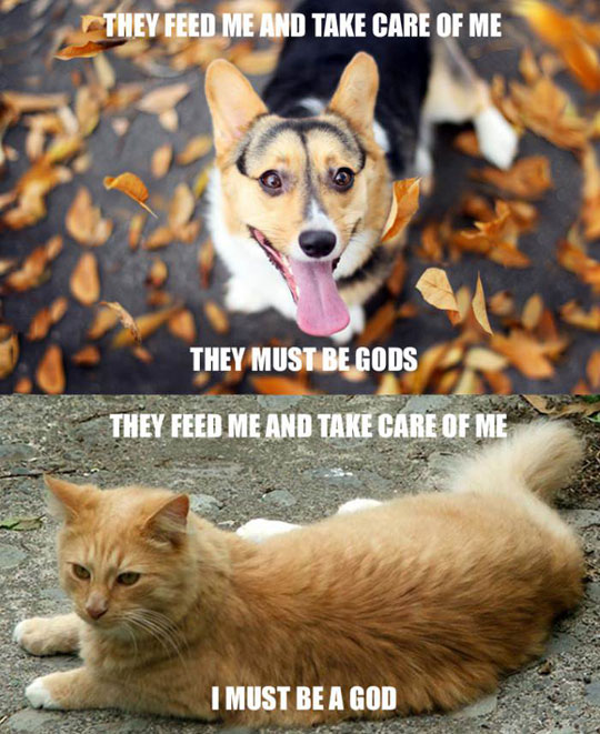 funny-dog-cats-thoughts-food-gods