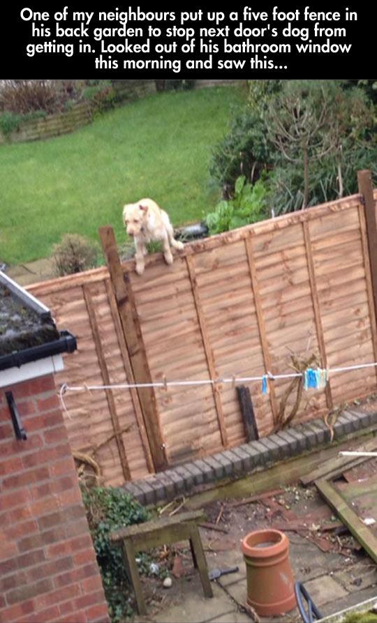 funny-dog-climbing-fence-neighbour