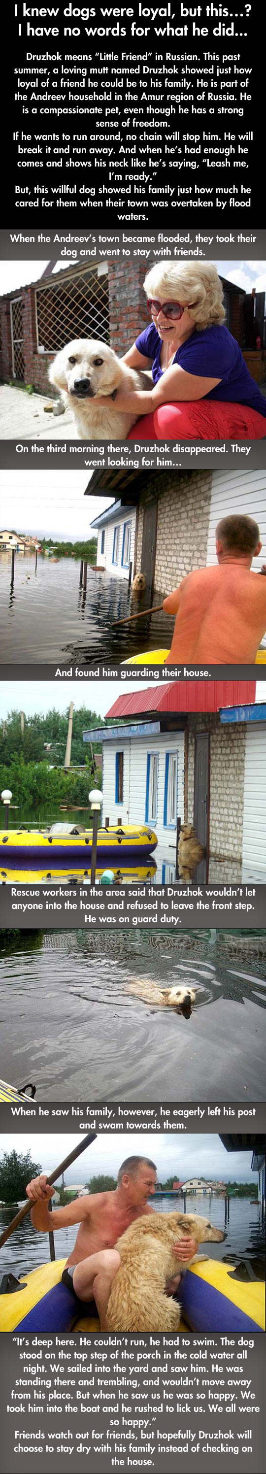 funny-dog-flood-Russia-pet-waters