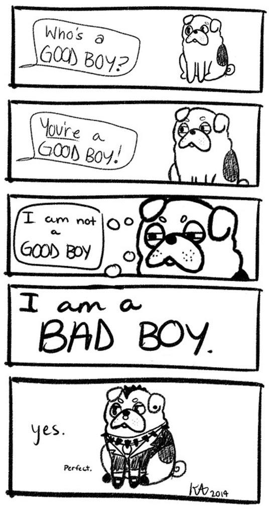 Good Boy Or Bad Boy?