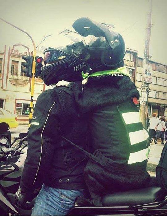 funny-dog-motorcycle-helmet-safety