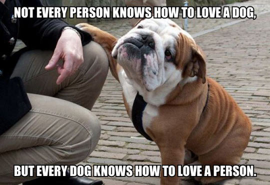funny-dog-person-how-to-love