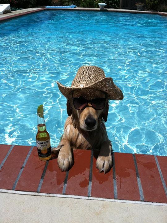funny-dog-pool-beer-hat-summer
