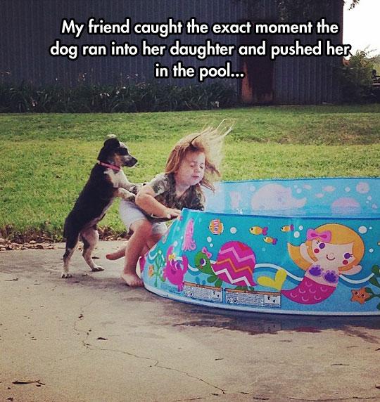 funny-dog-pushing-girl-pool