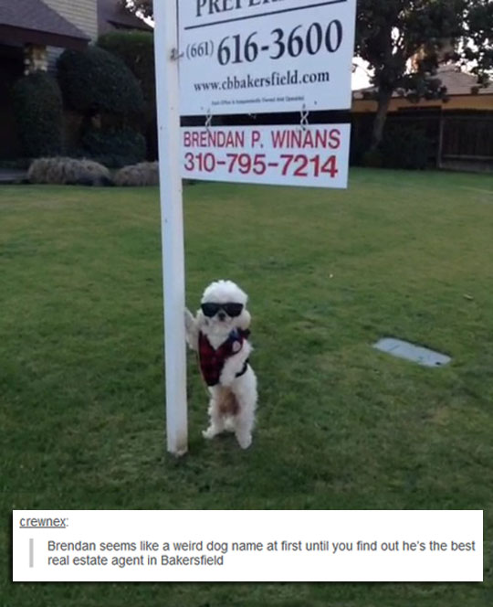 Exceptional Real Estate Agent