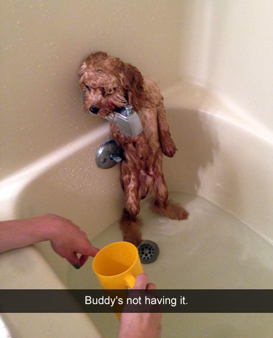 funny-dog-tub-bath-wet-scary