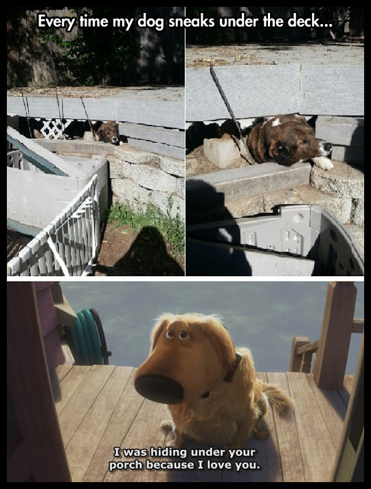 funny-dog-waiting-under-porch-Up