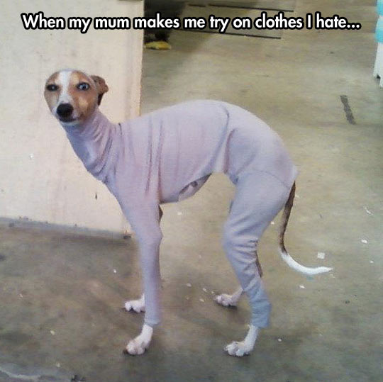funny-dog-wearing-clothes-Tumblr