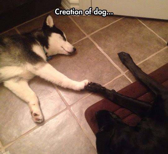 funny-dogs-sleeping-creation-cute