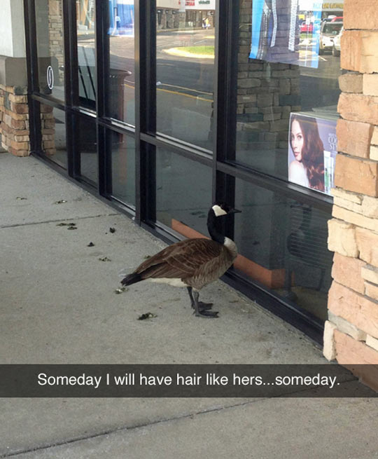 funny-duck-looking-image-hair