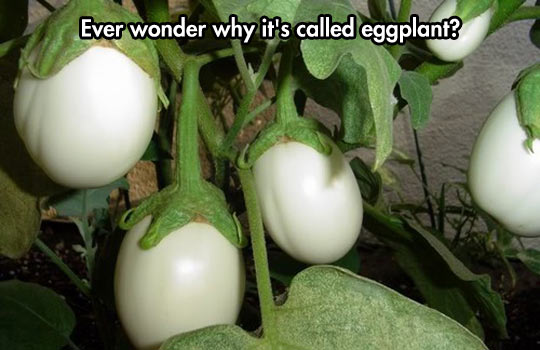 A Very Egg-sotic Plant