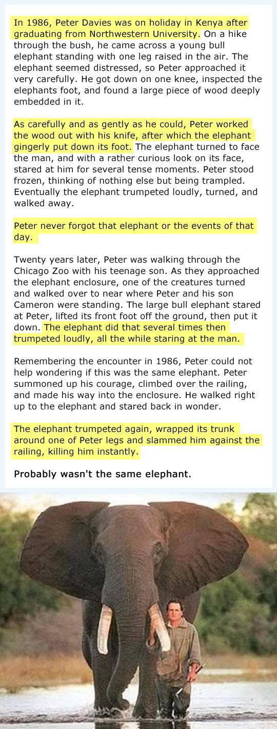 funny-elephants-story-help-Zoo