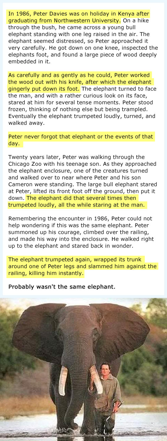 This Is Why They Say Elephants Have a Great Memory