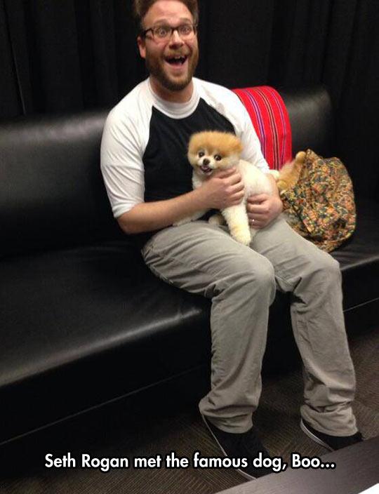 funny-face-Seth-Rogan-dog-Boo