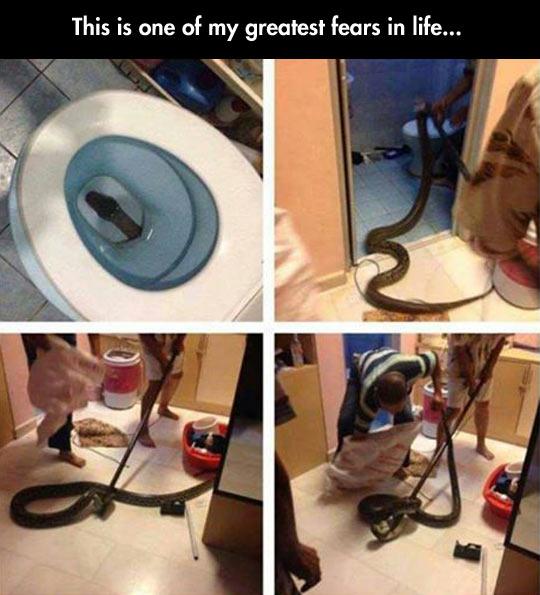 funny-fear-snake-inside-toilet