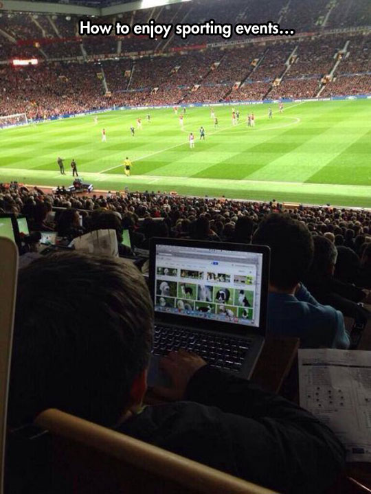 funny-football-soccer-laptop-dogs-court