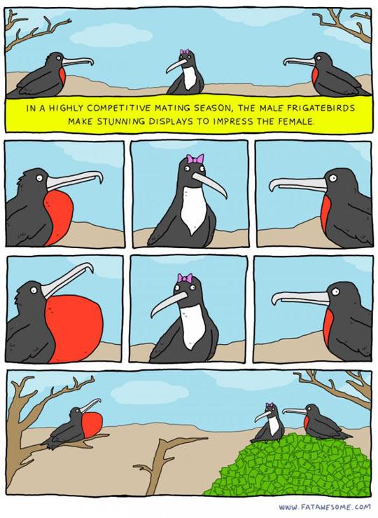 Reality Hit The Birds