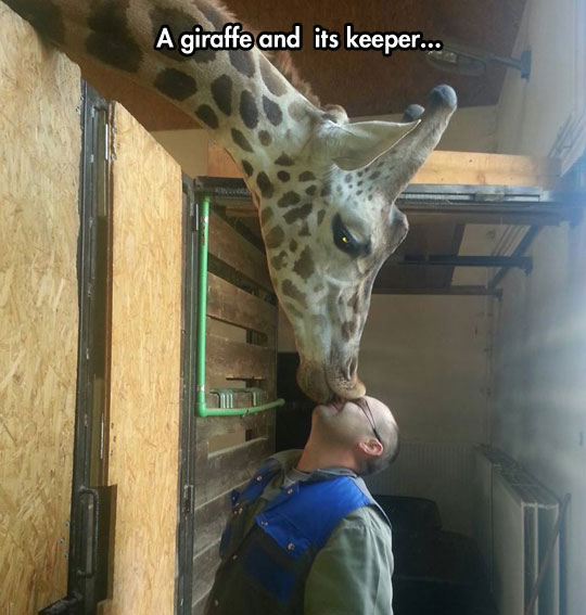 Unconditional Zoo Love