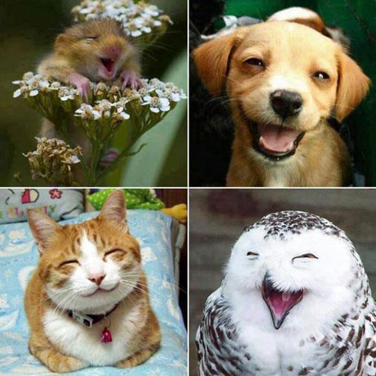 funny-happy-animals-smiles