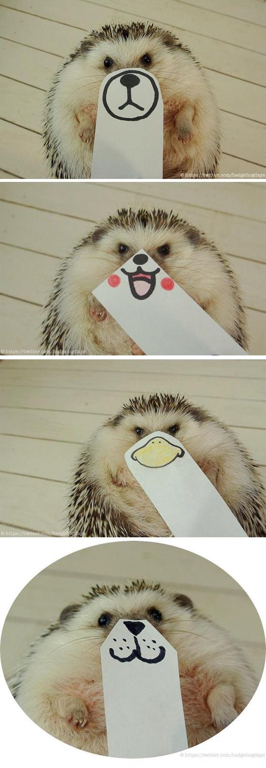 funny-hedgehog-faces-emotions-paper