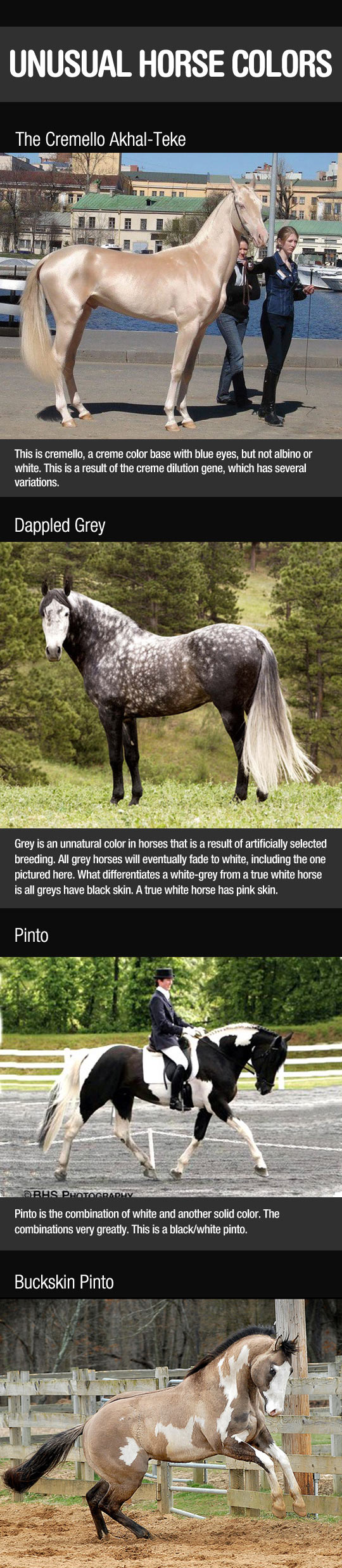 Unusual Horse Colors