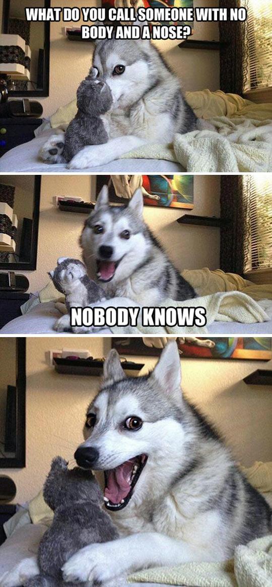 funny-husky-joke-toy-nose